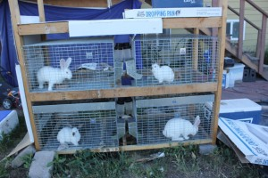 Rabbits all in their respective cages