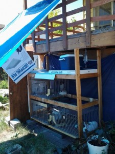 new cage setup
