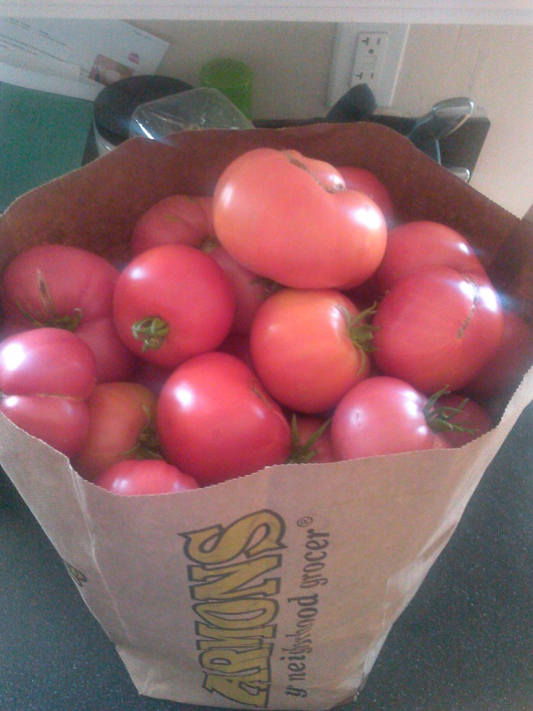large tomatoes from the garden, second harvest