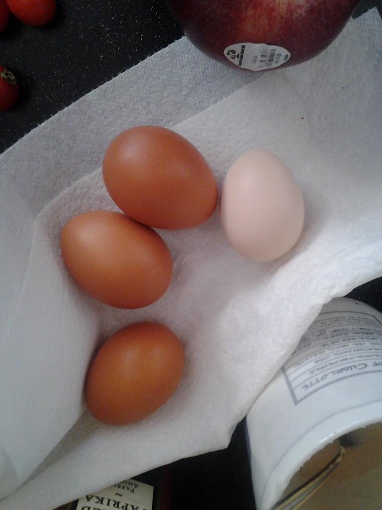 Tan/white egg!