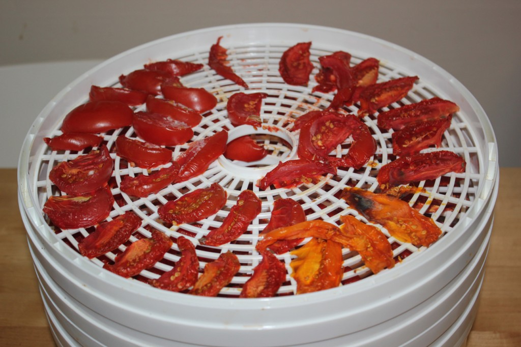 still-drying tomatoes