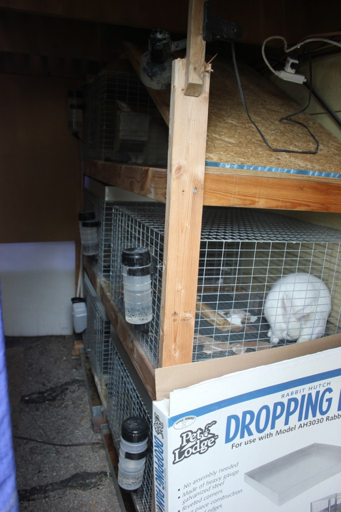 new rabbit setup under the deck