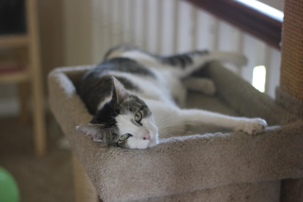 Mister-kitty