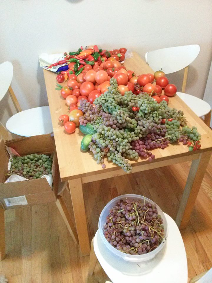 grapes, tomatoes, pickling cucumbers, peppers