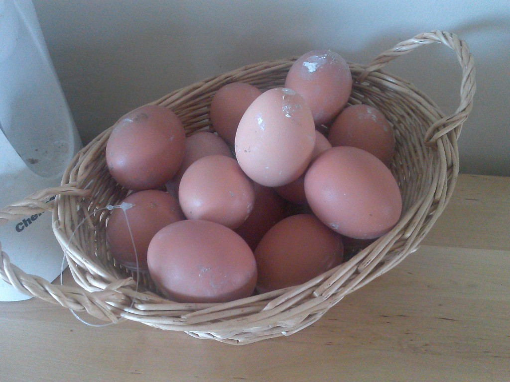 first eggs of 2015