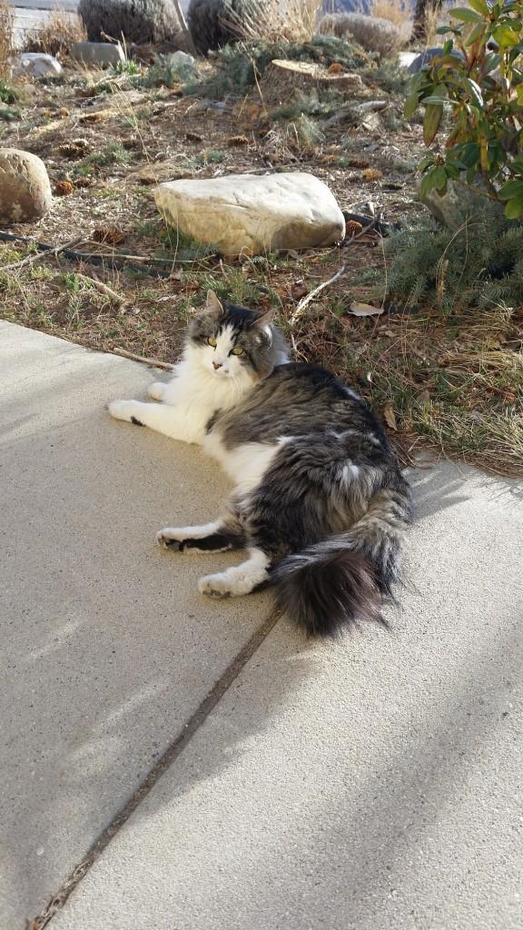 Joline lounging outside