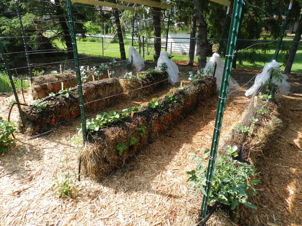 example of straw-bale gardening